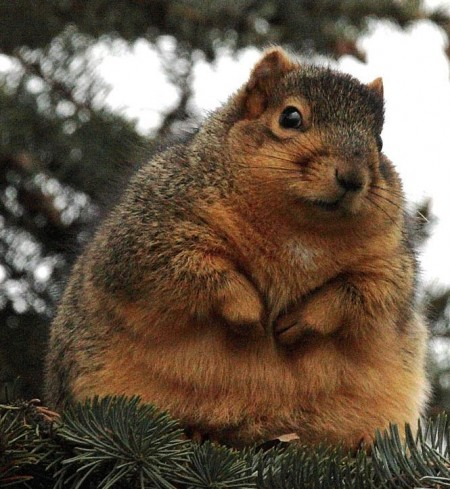 """While I was toying with a pun to refer to the squirrel by, I googled """"famous super extra fat dudes"""" and was reading a top ten list that ranked John Belushi as #5, and could only think to myself: """"Dang, he's not fat. He's a good-looking man."""" I guess this is an overshare but now you have a little insight into my taste in men."""
